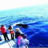 Whale Watch Package