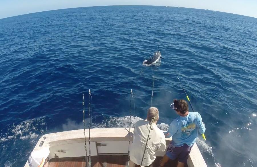 Billfishing1